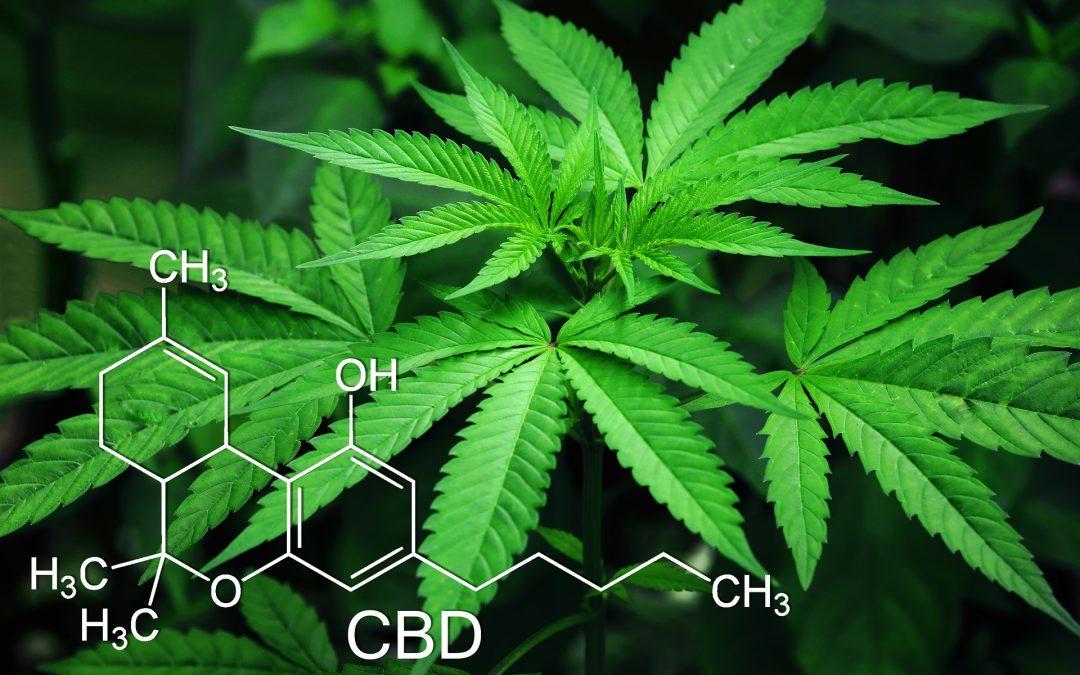 Cannabis Industry Update 10.26.18